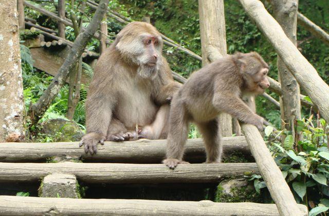 Monkeys in Mt