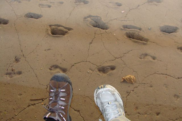 Footprints_in_the_sand