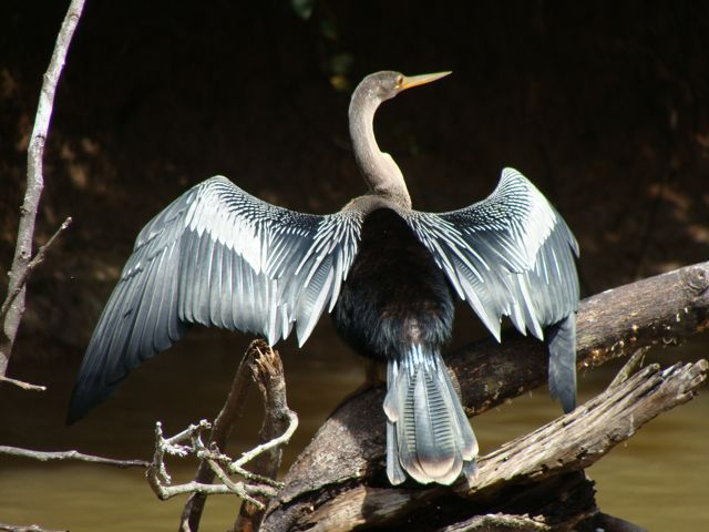 Costa_rica_wildlife
